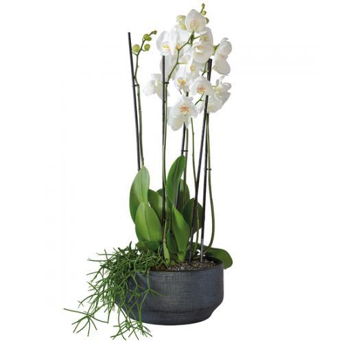 arrangement-d-orchid-es--1305659.jpg