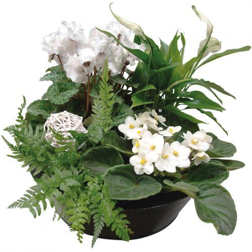 composition-fleurs---plan-278511.jpg