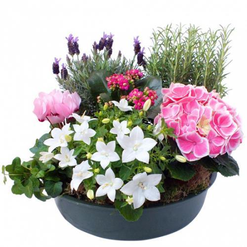 coupe-de-plantes-alma-476905.jpg