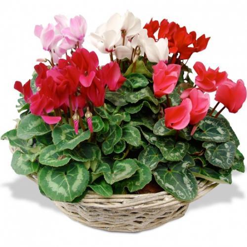 fleurs-toussaint-composit-279172.jpg