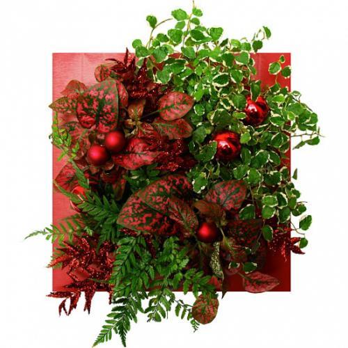 noel-carre-rouge-plaisir-289081.jpg