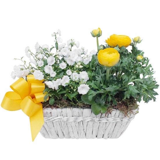 plantes-composition-migna-457886.jpg