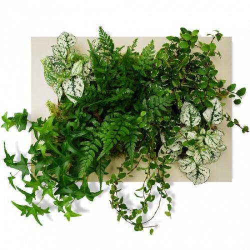 tableau-vegetal-d-ivoire-282655.jpg