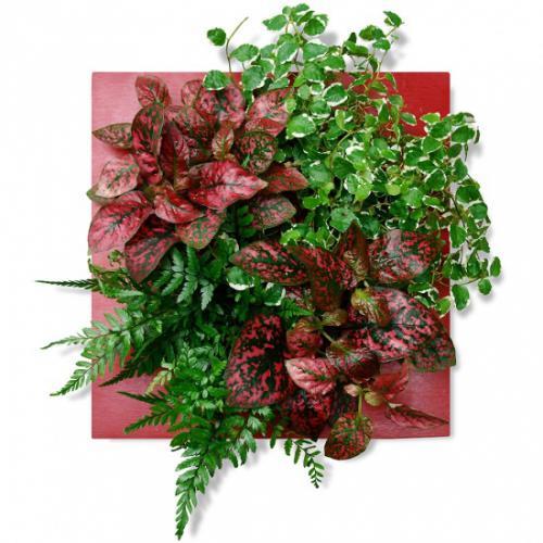 Tableau v g tal rouge plaisir fleurea - Tableau vegetal ...
