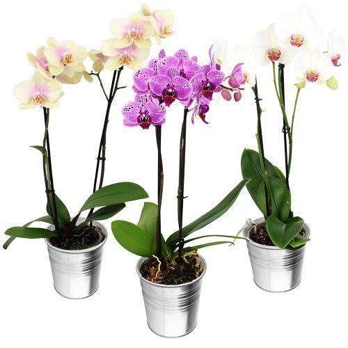 1-orchidee-2-branches-9661.jpg
