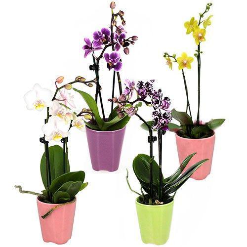 4-mini-orchidees-14856.jpg