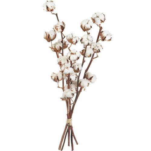 fleurs-de-coton-44738.jpg