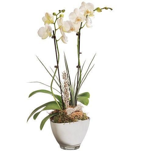 orchidee-blanche-2-branch-11206.jpg