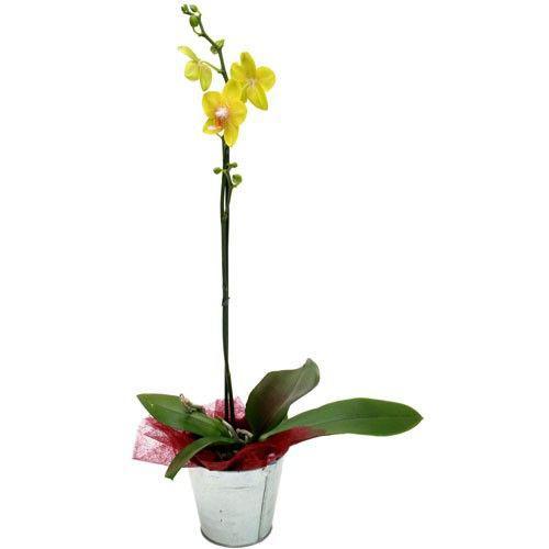 orchidee-jaune-1-branche-969.jpg