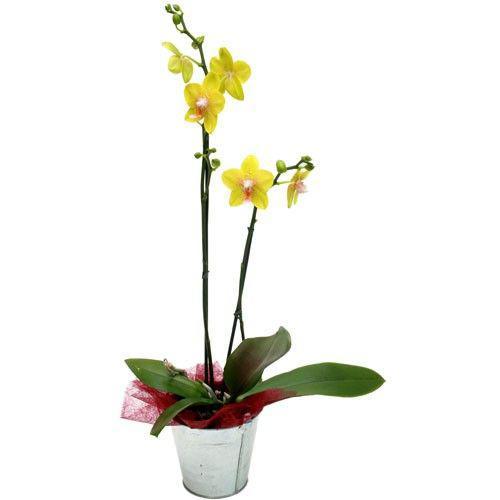 orchidee-jaune-2-branches-960.jpg
