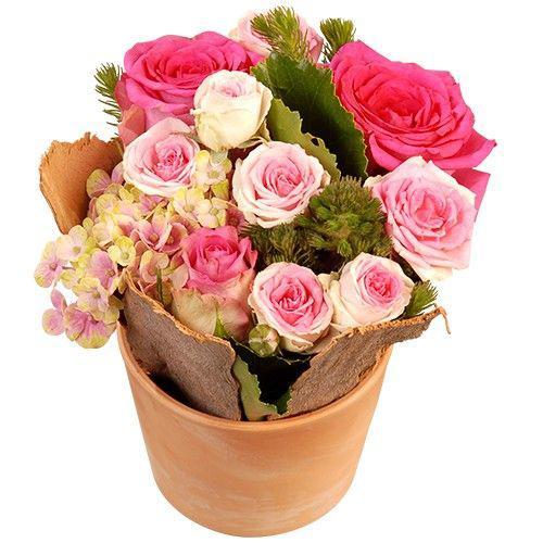 sweet-rose-11420.jpg