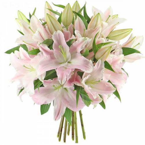 majestueux-lys-roses-298.jpg