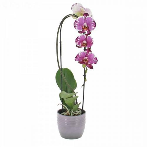 orchid-e-cascade-562.jpg