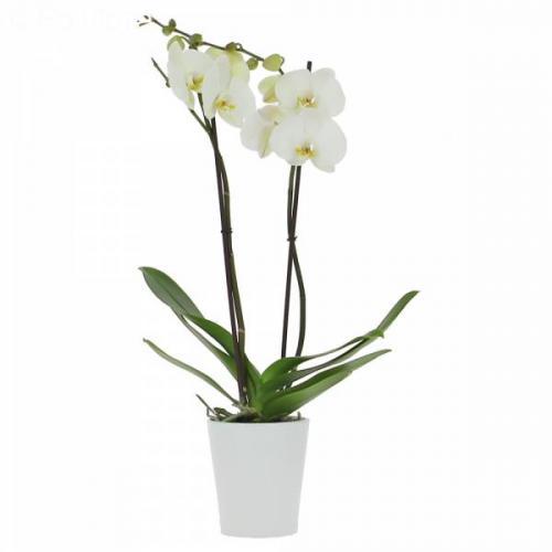 orchid-e-de-l-amour-(2-b-15.jpg