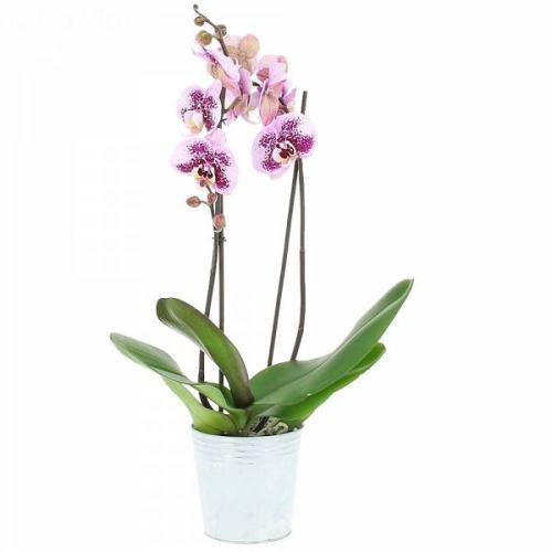 orchid-e-mouchet-e-66.jpg