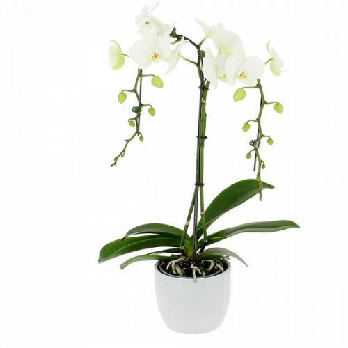 orchid-e-parapluie-471.jpg