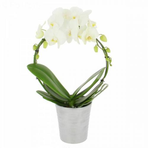 orchid-e-prestige-238.jpg