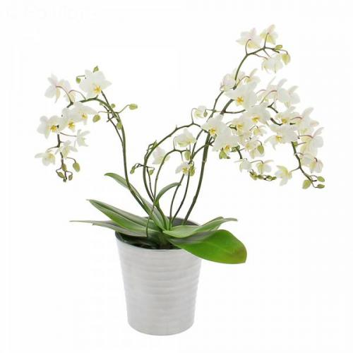 orchid-e-sauvage-421.jpg