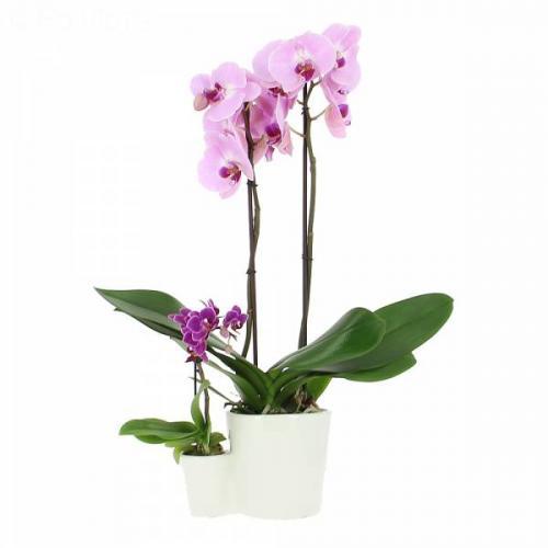 orchid-es-m-re-et-fille-330.jpg