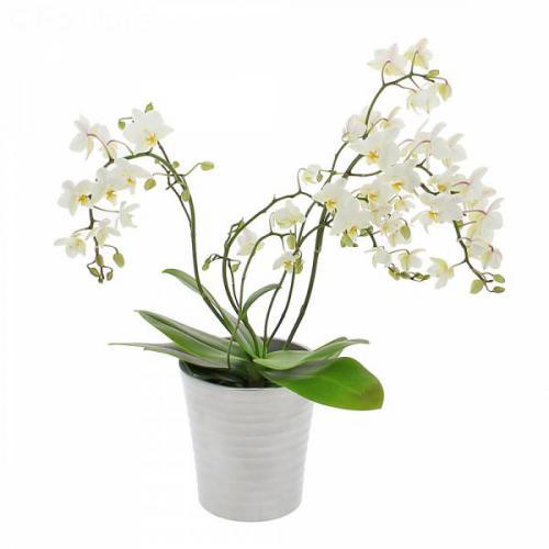 orchidee-sauvage-421.jpg