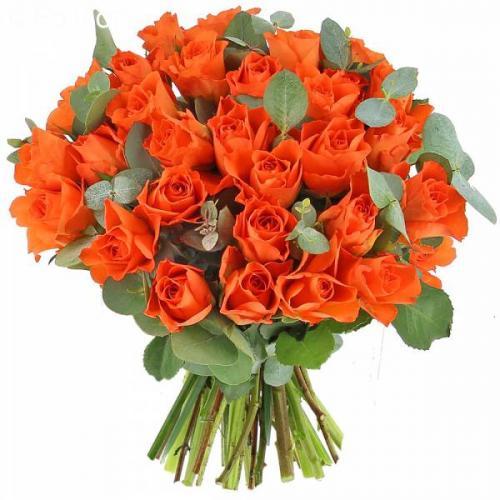 roses-andalouses-586.jpg