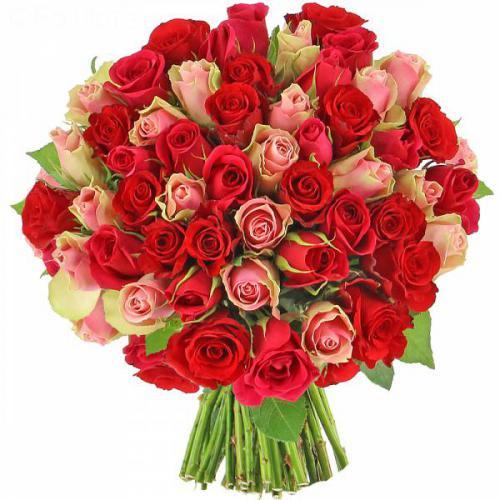 roses-audace-518.jpg