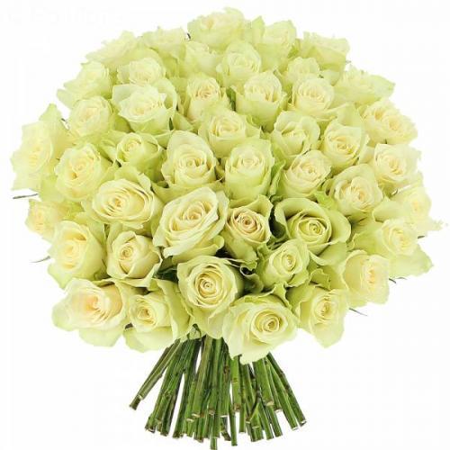 roses-blanches-el-gance-139.jpg