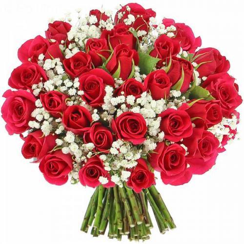 roses-d-lice-511.jpg