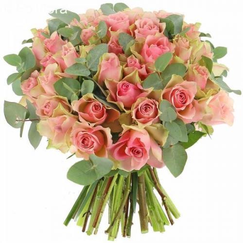 roses-d-sir-585.jpg