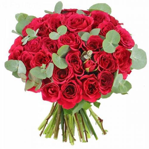 roses-lovely-584.jpg