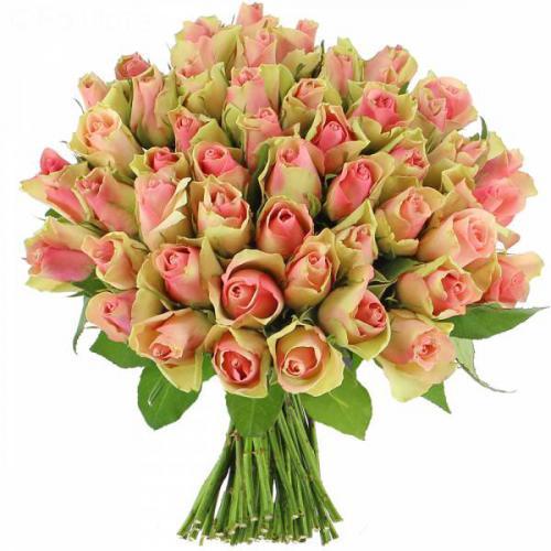 roses-pinky-140.jpg