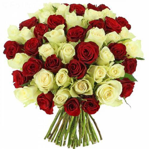 roses-sensation-271.jpg