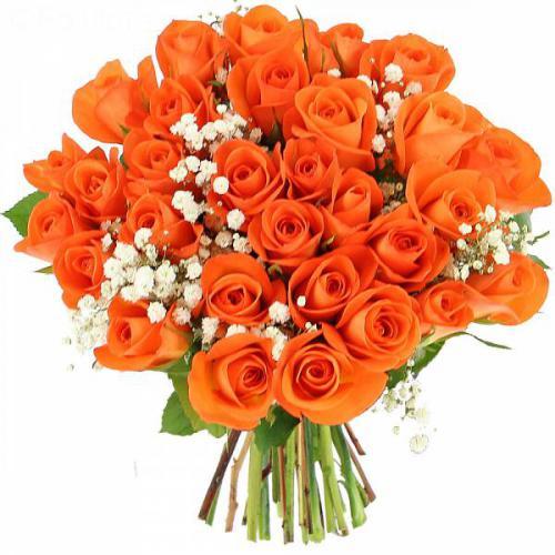 roses-sunlight-507.jpg