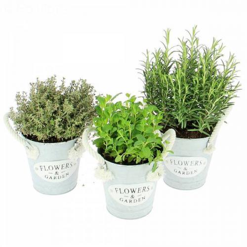 trio-de-plantes-aromatiqu-475.jpg