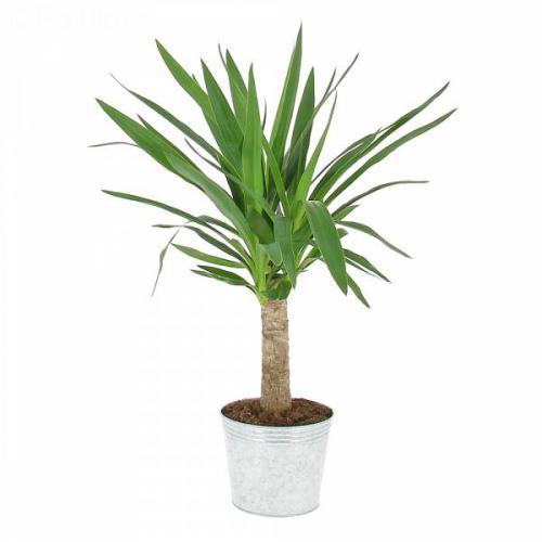yucca-29.jpg