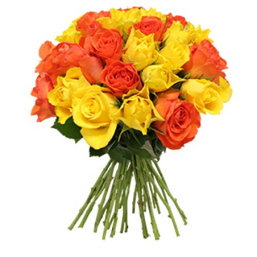 flor-acidule-30-roses-fo01.jpg