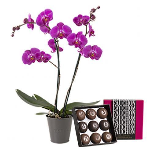 orchidee-et-son-ecrin-fau-b5fa.jpg