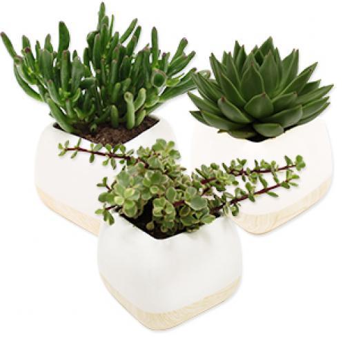 plantes-grasses-b5pg.jpg